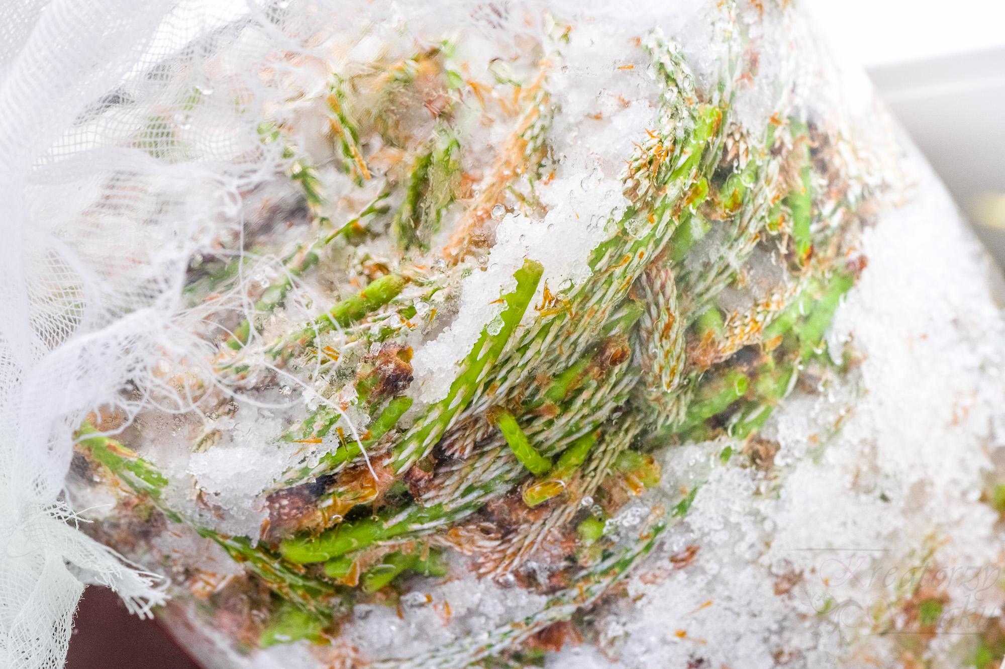 syrop z pędów sosny